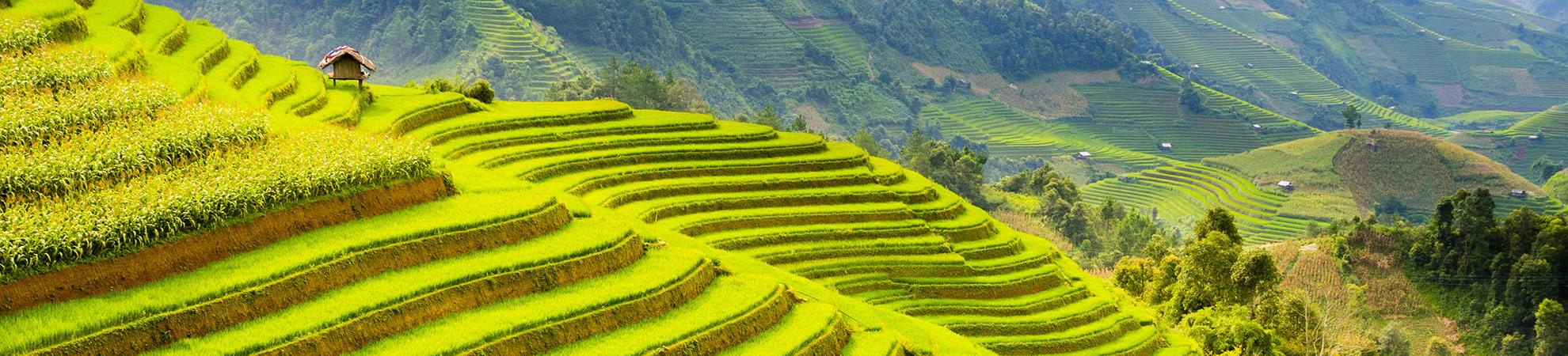 Meilleures saisons pour visiter le Vietnam