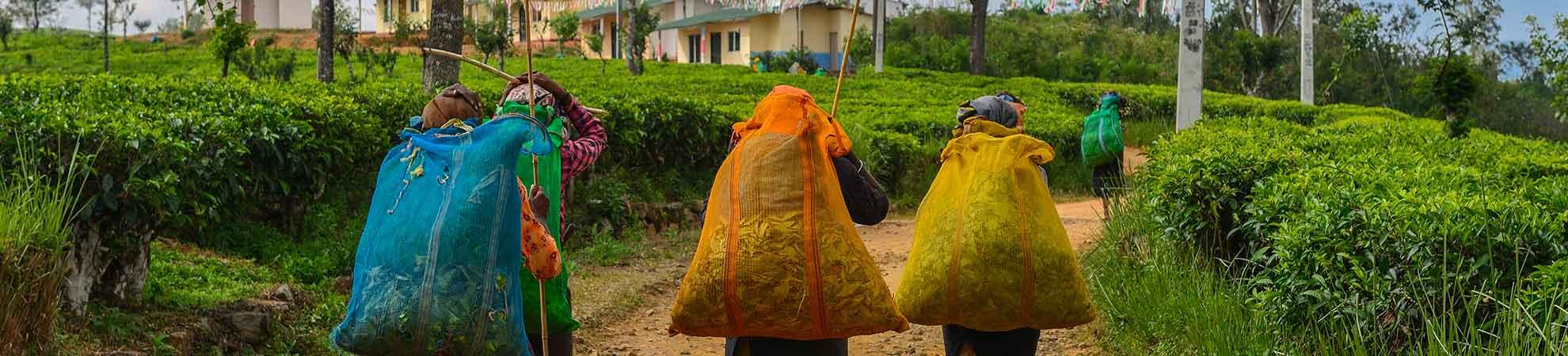 Niveau de vie au Sri Lanka