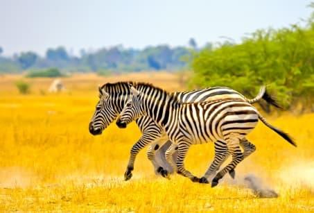 Grand angle sur la Tanzanie