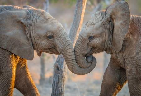 Park Kruger, rencontre avec la faune africaine