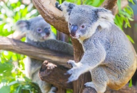 Ma tribu en Australie