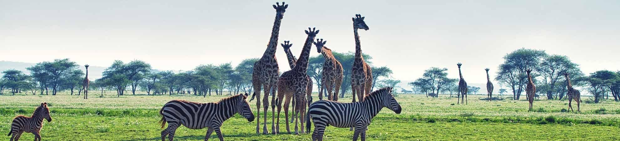 Voyage Le centre - Tanzanie