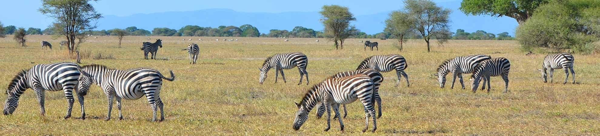 Voyage Les Grands Parcs - Tanzanie