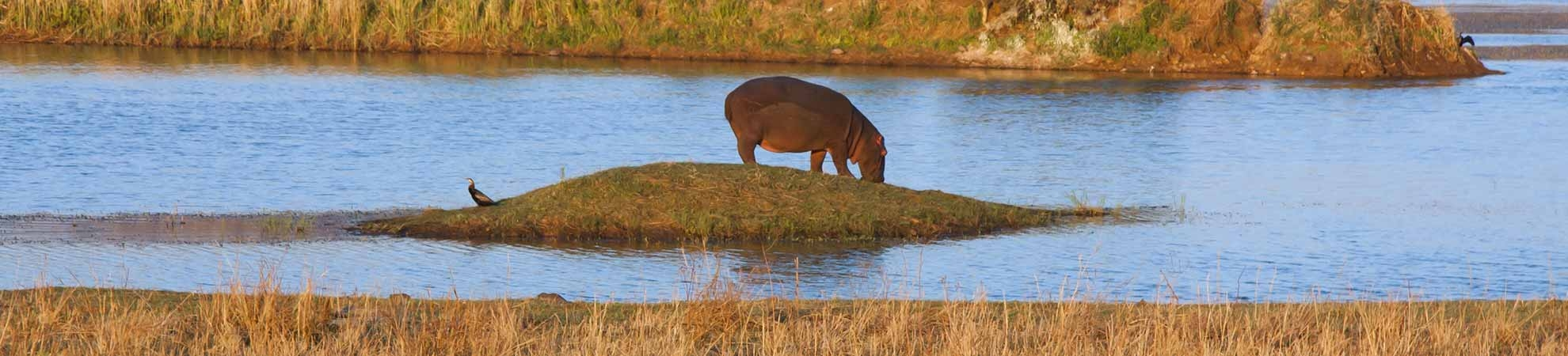 Voyage Pilanesberg Game Reserve