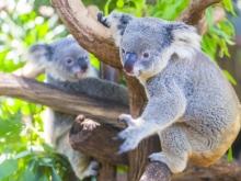 Voyage sur-mesure australia