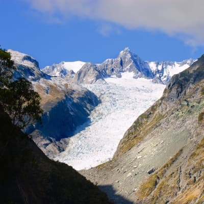 Exploration de Fox Glacier