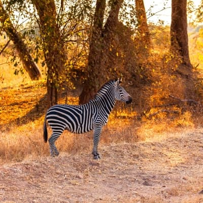 Vos activités safaris à Niassa