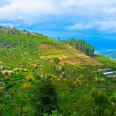 Visite du village d'Hiriwaduna