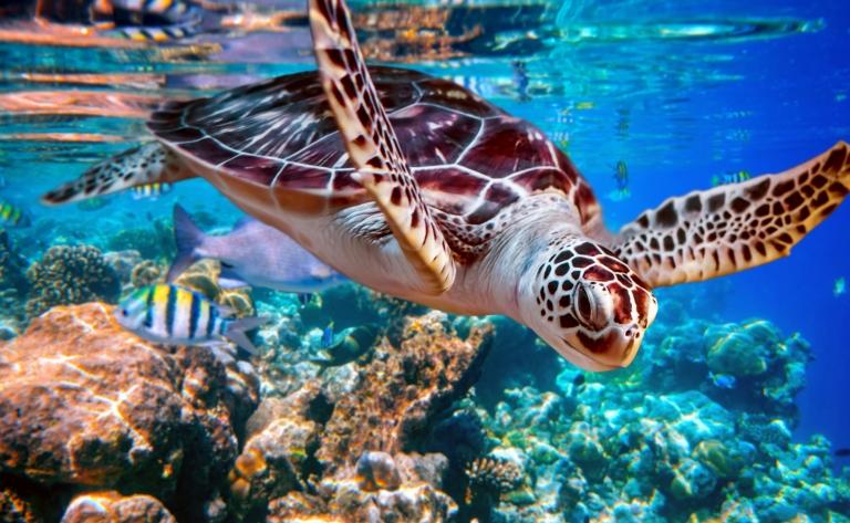 Coraux et plages des îles Perhentians