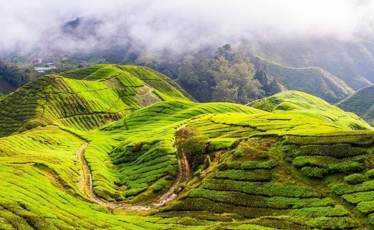 En route vers les plantations de thé