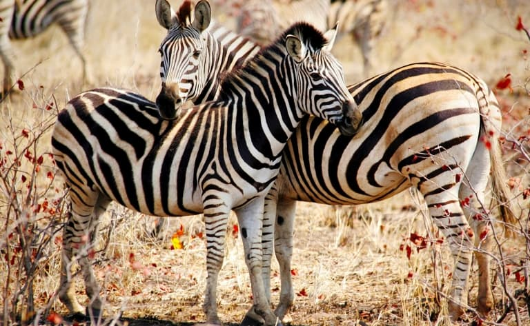 Njoro Trek, paysages d'Olduvai