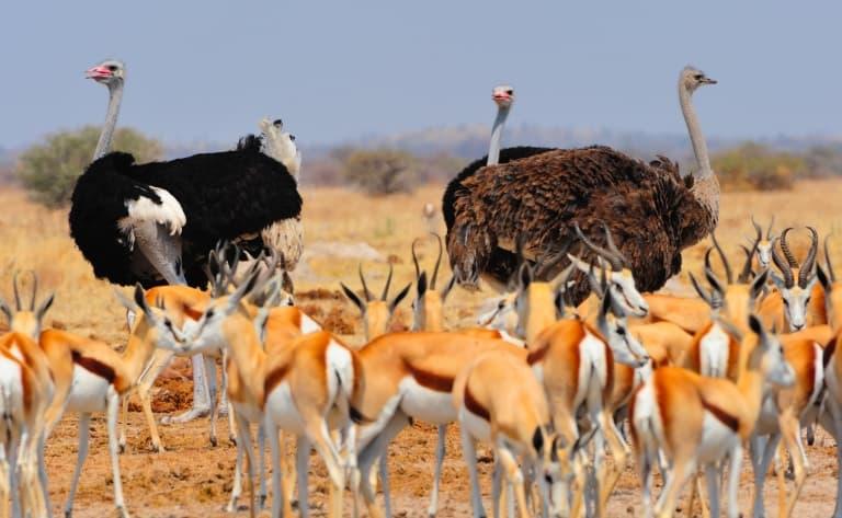 Découverte du Parc Chobe