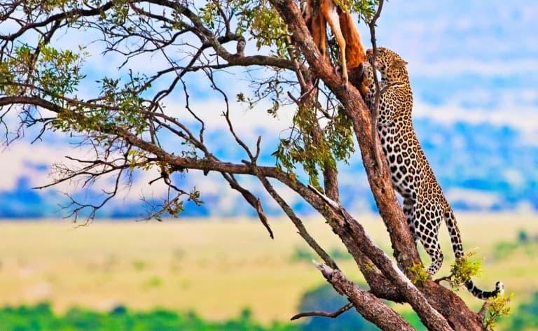 Sur la piste du légendaire Masai Mara