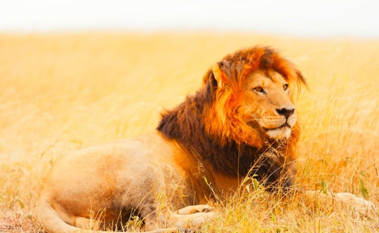 Safari dans la savane