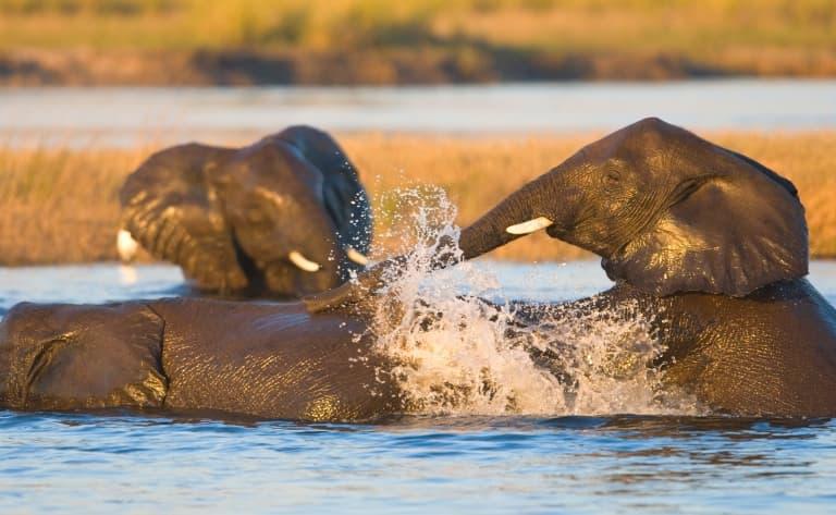 Journée complète de safaris
