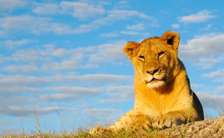 Safari sauvage au Parc Hwange