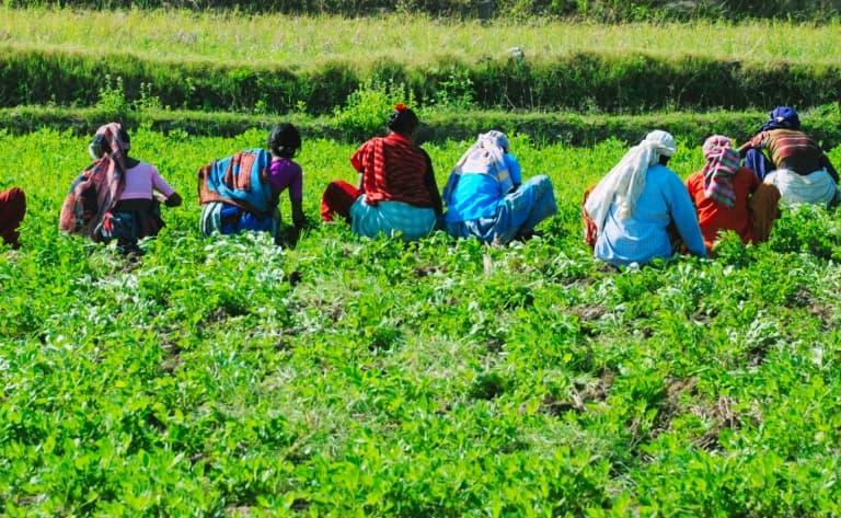 Déjeuner dans une plantation d'épices à Kalaketty Estate