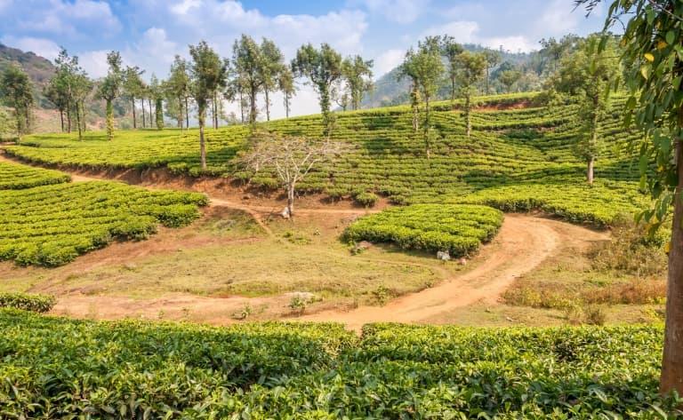 Au cœur du Kerala