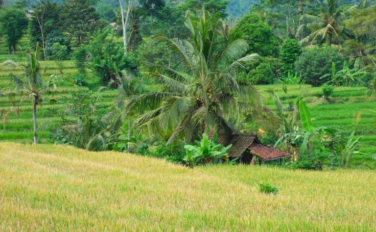 Découverte authentique de l'Est de Bali