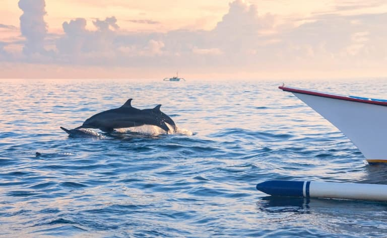 Découverte des dauphins de Lovina, sources de Banjar, temples d'Ulun Danu et Tanah Lot