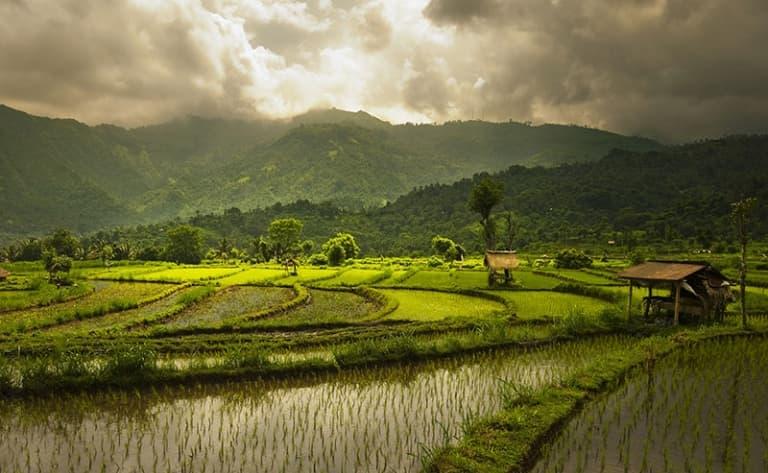 Balade dans la région d'Ubud