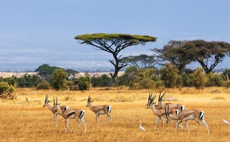 En chemin pour les  contrées sauvages : bienvenue au Botswana !