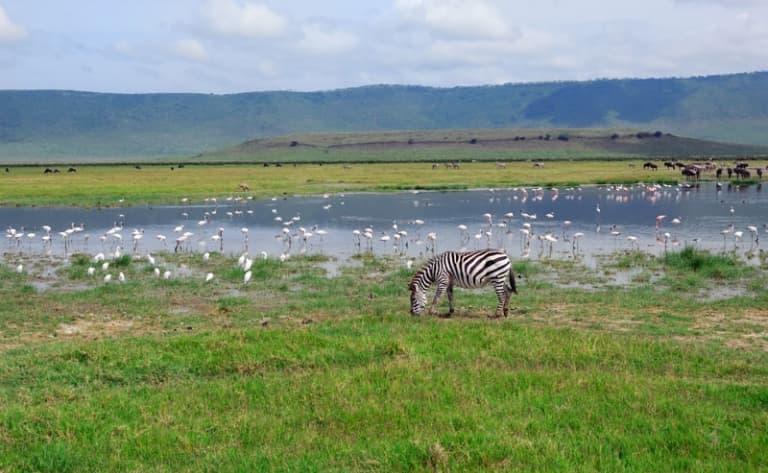 Sur les traces des premiers hommes : incontournable Olduvai